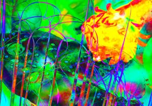 Digital Fine Art Screen Shot 2015-11-19 at 2.07.22 PM