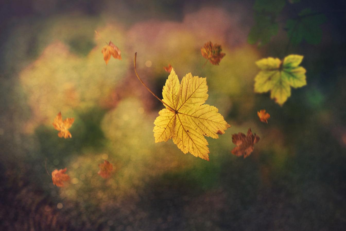 Digital art prints for Fall by Edwin Leung