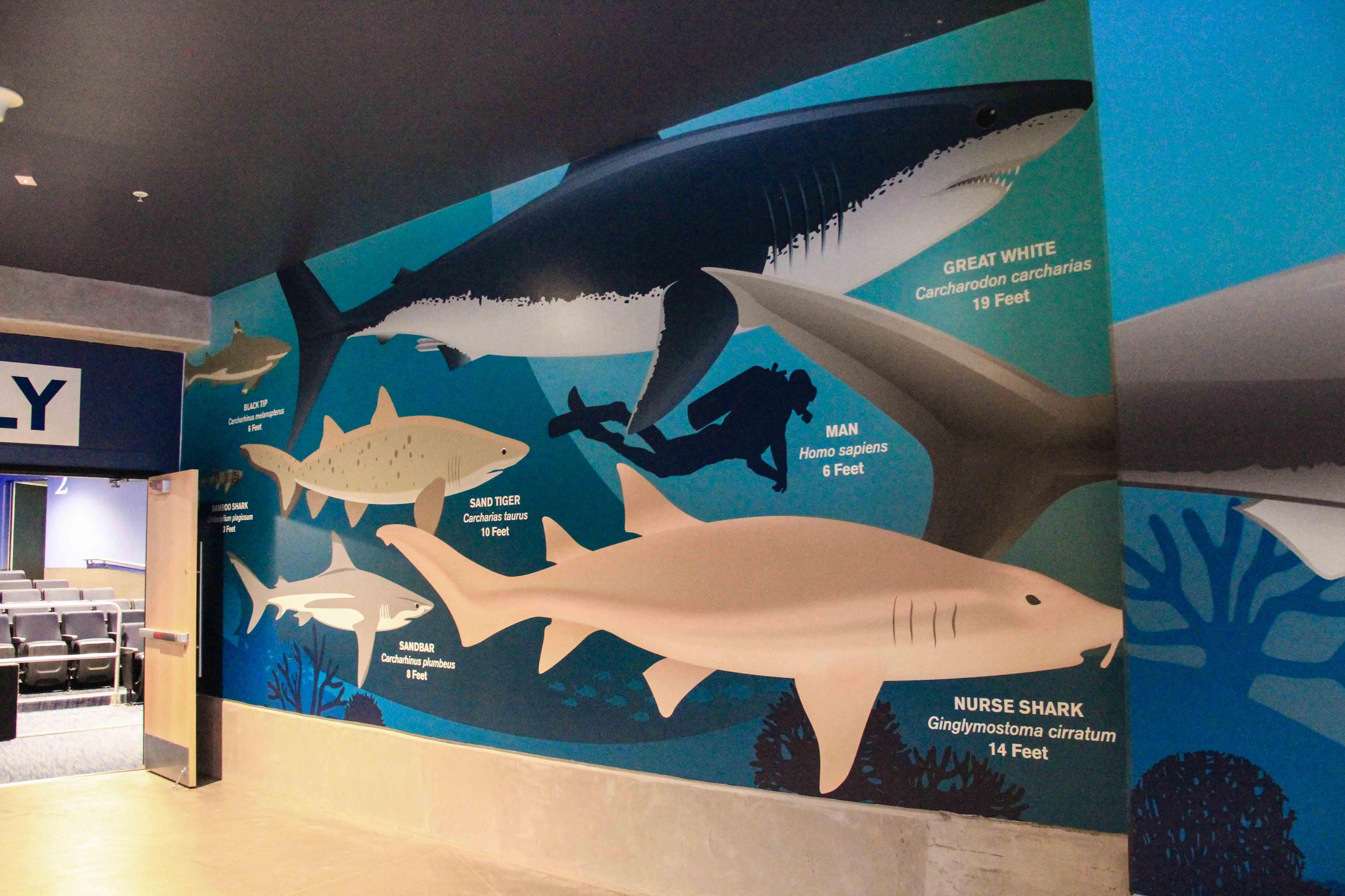 OdySea Shark Wallpaper