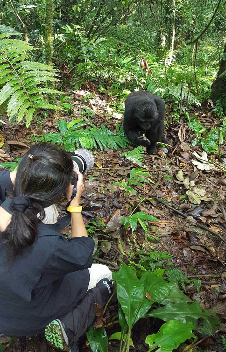 Asha Wadher Gorillas Africa