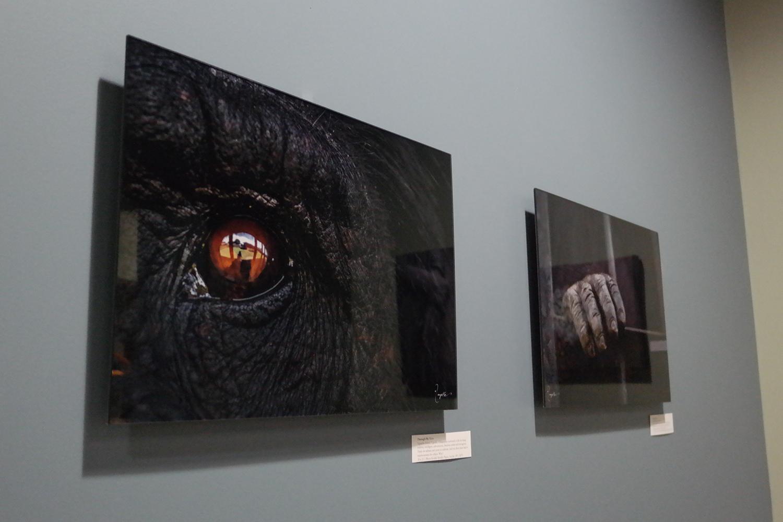 best acrylic prints eye