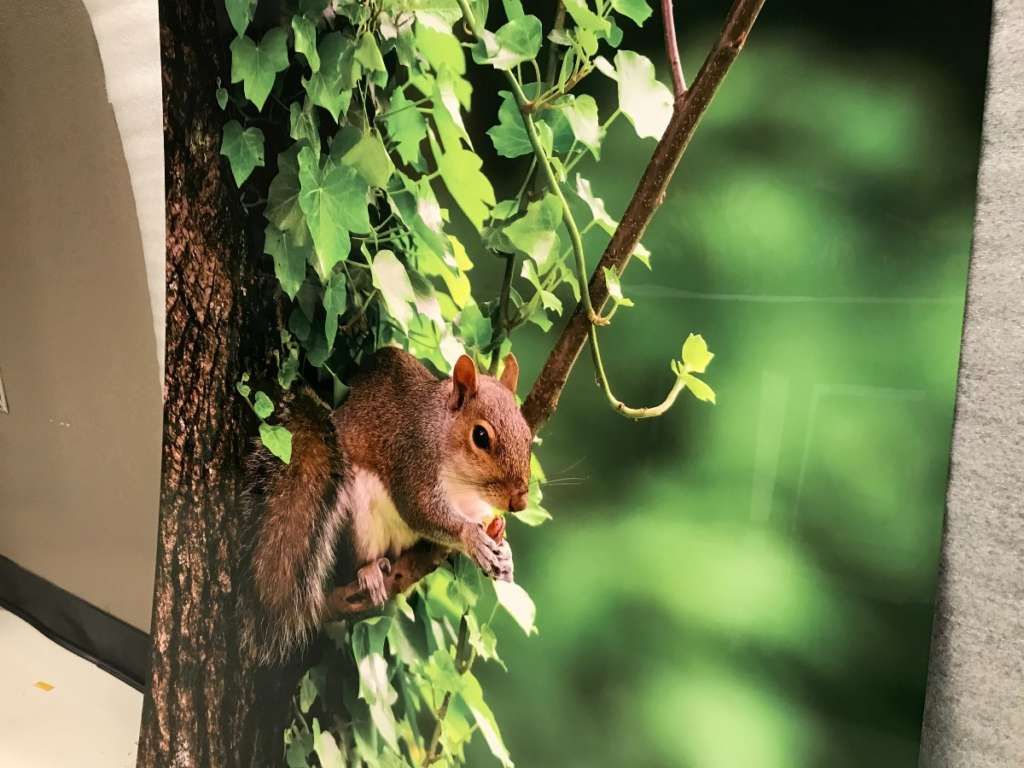 FIne art prints for KSL Camelback Hotel picture of a squirrel web