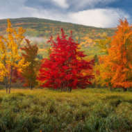 Acadian Color Fall trees and mountains